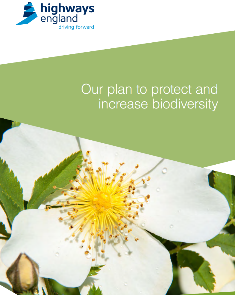 Plan to protect and increase biodiversity. Highways England